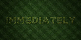 IMMEDIATELY - fresh Grass letters with flowers and dandelions - 3D rendered royalty free stock image Stock Images