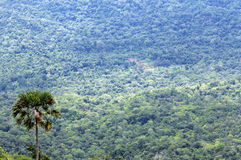 Immense forest. In Chaiyaphum province,Thailand Royalty Free Stock Image