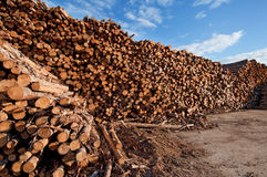 Immense log pile, Saguenay Quebec Royalty Free Stock Photos