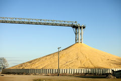 Immense pile of grain. Immense pile of corn from bumper crop Royalty Free Stock Photo