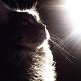 Immer Blick auf die Sonnenseite des Lebens lizenzfreies stockfoto