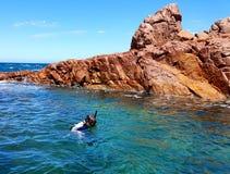 Immergendosi in uno stagno di marea della roccia Fotografia Stock