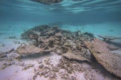 Immergendosi, vista splendida del mondo subacqueo Le barriere coralline morte, l'erba del mare, la sabbia bianca ed il turchese i fotografie stock libere da diritti
