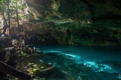 Immergersi la caverna di Cenote a Tulum cancun Attraversando through Mex Fotografia Stock Libera da Diritti