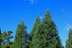 Immergrün und Blau Stockbilder