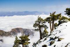 Immergrüne Bäume hoch auf dem Berg; Meer von weißen Wolken im Hintergrund, der das Tal, Berg San Antonio (Mt Baldy) bedeckt, Los lizenzfreie stockfotos