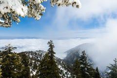 Immergrüne Bäume hoch auf dem Berg; Meer von weißen Wolken im Hintergrund, der das Tal, Berg San Antonio (Mt Baldy) bedeckt, Los stockbilder
