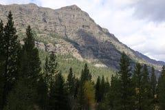 Immergrüne Bäume und Berg Lizenzfreie Stockbilder