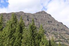 Immergrüne Bäume und Berg Stockbilder