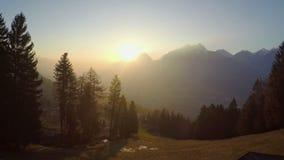 Immergrüne Kiefer im goldenen Sonnenlicht, großartige Gebirgsschattenbilder, magische Stunde stock video