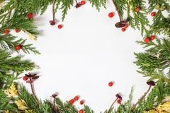 Immergrüne Tannenbaumdekoration für die Weihnachtskarte lokalisiert Lizenzfreies Stockbild