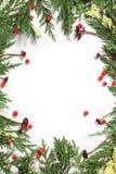Immergrüne Tannenbaumdekoration für die Weihnachtskarte lokalisiert Stockfotos