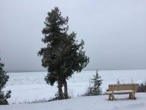 Immergrüner Baum und Schnee bedeckten Bank Stockfoto