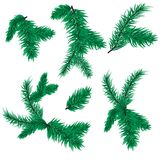 Immergrüner Naturwinterurlaub der Tannenbaumastvektorweihnachtsfichte lokalisiert auf weißem Hintergrund Lizenzfreies Stockfoto