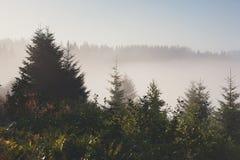 Immergrüner Waldüberblick, Landschaftshintergrund Stockfotos
