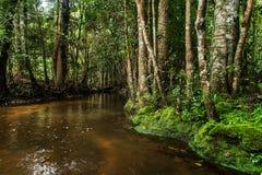 Immergrüner Wald und Strom, die langsam fließt Stockfoto