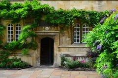 Immergrünes Oxford Lizenzfreie Stockfotos