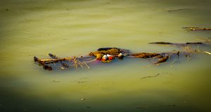 Immersion of Durga in Ganga River. Immersion of Durga idol in Ganga river Royalty Free Stock Image