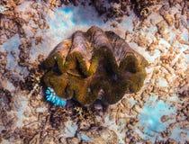 Immersione con bombole della Grande barriera corallina Fotografia Stock Libera da Diritti