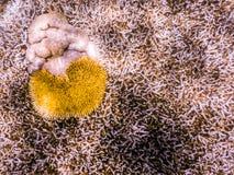 Immersione con bombole della Grande barriera corallina Fotografie Stock Libere da Diritti