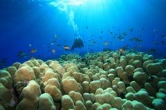 Immersione con bombole in mari tropicali Fotografia Stock Libera da Diritti