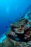 Immersione con bombole pericolosamente bella dell'Aceh Indonesia Fotografie Stock