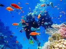 Immersione subacquea attiva di resto alle barriere coralline immagine stock libera da diritti