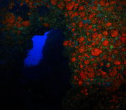 Immersione subacquea della caverna Fotografia Stock