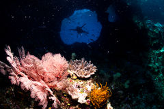 Immersione subacquea della caverna Immagini Stock