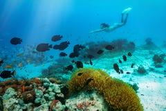 Immersione subacquea della donna con i pesci ed i coralli tropicali immagini stock libere da diritti