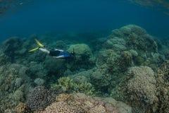 Immersione subacquea di Snorkeler sulla scogliera Immagini Stock