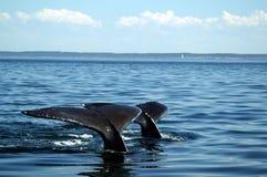 Immersione subacquea in tandem Fotografie Stock