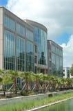 Immeuble et palmiers de bureaux. Image stock