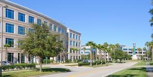 Immeubles de bureaux avec des paumes Images libres de droits