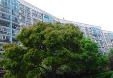 Immeubles modernes avec un grand arbre dans l'avant à Changhaï Photographie stock
