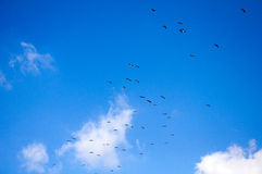 Immigrating Birds Royalty Free Stock Photography
