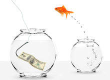 Immigration to united states of america. Goldfish jumping into bowl with dollar on hook Royalty Free Stock Photo