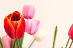 Immitation di plastica e fiori artificiali che sono tulipani Rosso Fotografia Stock