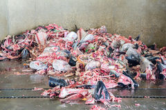 Immondizia residua del pesce fotografie stock