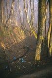 immondizia su terra, paesaggio di scena della natura Fotografie Stock