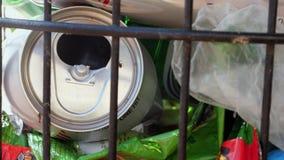 Immondizia in un cestino per la carta straccia della via e formiche ed altri insetti Inquinamento ed ecologia della città stock footage