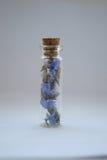 Immortelle en el tarro de cristal Imágenes de archivo libres de regalías