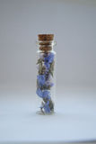 Immortelle in glass jar Royalty Free Stock Images