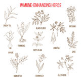 Immune enhancing herbs Stock Photo