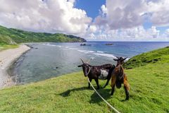 Imnajbu Alapad baixo naval velho, ilha de Batan, Batanes Fotos de Stock Royalty Free