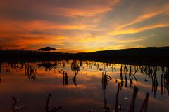 Impacto das alterações climáticas Inunde na exploração agrícola do arroz na vila rural de Tailândia Imagem de Stock Royalty Free