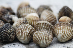Impacto dos shell Fotografia de Stock