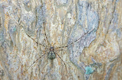 Impaired spider on tree bark Stock Photos