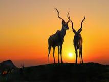 Impala Antelopes, Africa Sunset Stock Photo