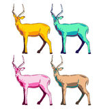 Impala illustration. Colorful vector set Stock Image